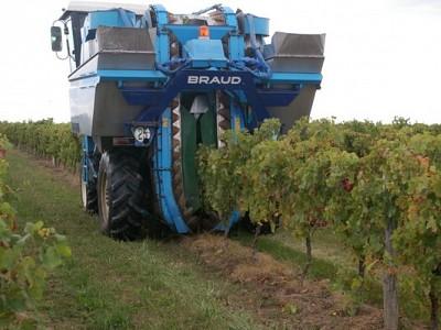 ブドウの機械摘み