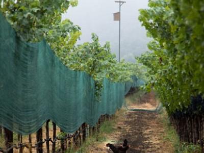 地球温暖化とワイン産業